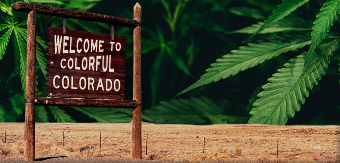 Photo for: 20 Leading Cannabis Dispensaries In Colorado