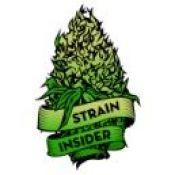 Photo for: Strain Insider